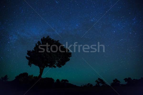 Mleczny sposób sylwetka drzewo star lasu Zdjęcia stock © vichie81