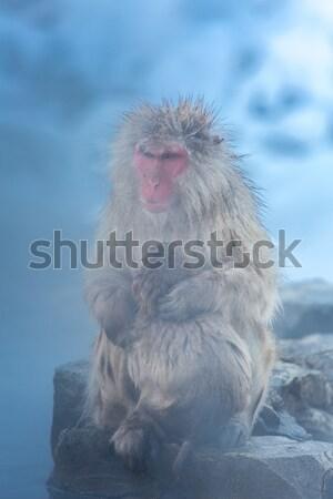снега обезьяны Японский термальная ванна парка человека Сток-фото © vichie81