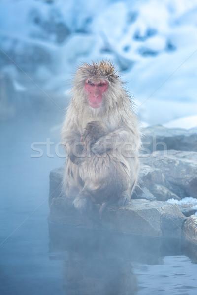 снега обезьяны Японский термальная ванна парка весны Сток-фото © vichie81