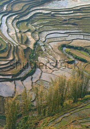 Traditionnel échelle riz champs Viêt-Nam Photo stock © vichie81