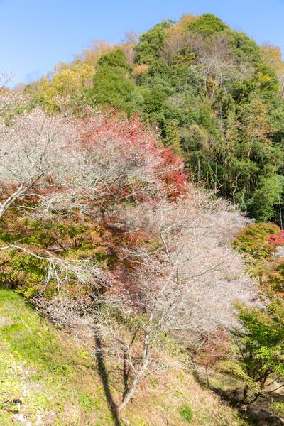 Obara Toyota Nagoya Japan Stock photo © vichie81