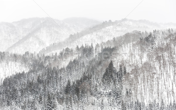 forest Snowfall Stock photo © vichie81