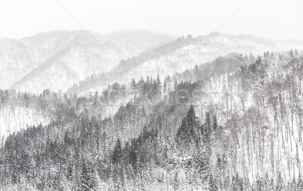 Erdő hóesés gyönyörű tél tájkép hó Stock fotó © vichie81