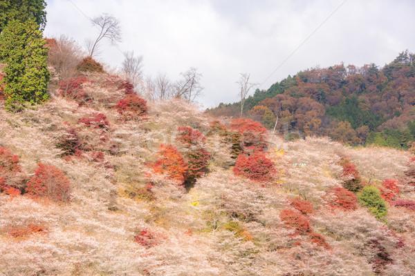 Sakura outono paisagem flor primavera madeira Foto stock © vichie81
