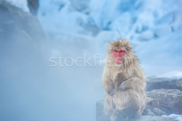 Snow monkey Macaque Onsen Stock photo © vichie81