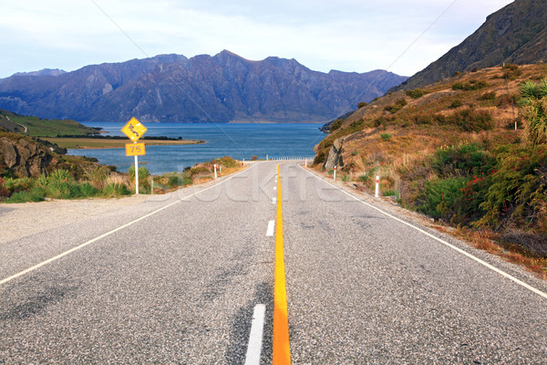 Highway New Zealand Stock photo © vichie81