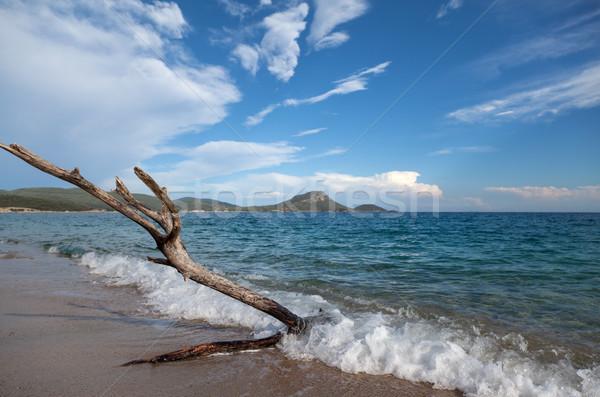 Old Tree Sea Clouds Stock photo © vilevi