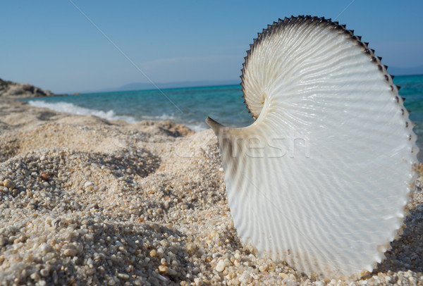 Conchiglia spiaggia mare grande bella vuota Foto d'archivio © vilevi