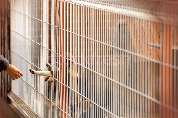 Hond menselijke verbinding touch weinig daklozen Stockfoto © vilevi