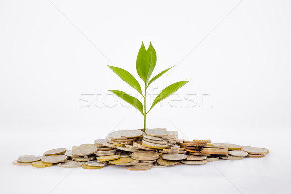 plant and coins Stock photo © vinnstock