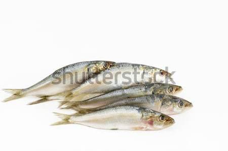 Indian oil sardine Stock photo © vinodpillai