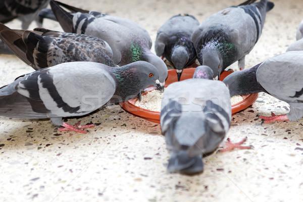 Grupo prato cidade pena aves Foto stock © vinodpillai