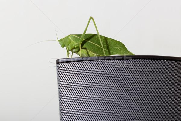 Feuille verte visage nature couleur tête antenne Photo stock © vinodpillai