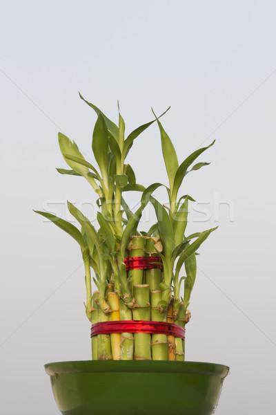 Chanceux bambou ciel bleu feuille asian Photo stock © vinodpillai