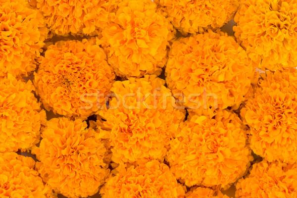 Marigold flowers  Stock photo © vinodpillai