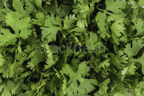 Kişniş yaprakları sağlık taze sağlıklı Stok fotoğraf © vinodpillai