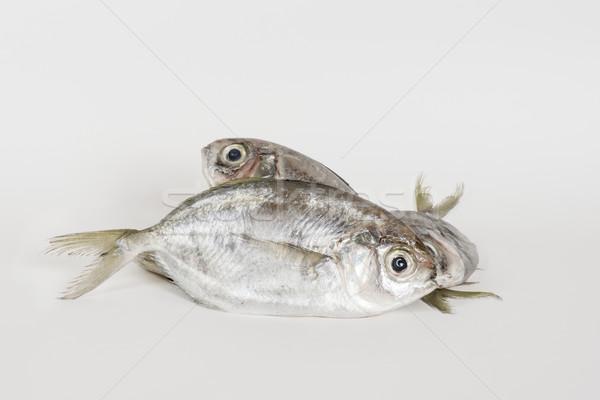 ложный рыбы морем тропические животного индийской Сток-фото © vinodpillai