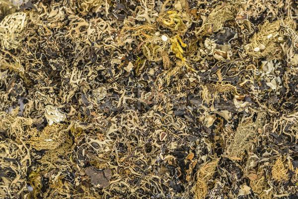 Noir pierre fleur fond cuisson Photo stock © vinodpillai