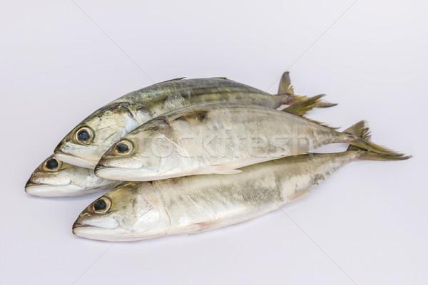 Fresco indiano cavala peixe branco comida Foto stock © vinodpillai