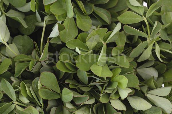 Fenugreek leaves Stock photo © vinodpillai