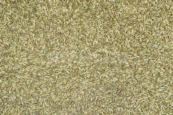 Fennel seeds background Stock photo © vinodpillai