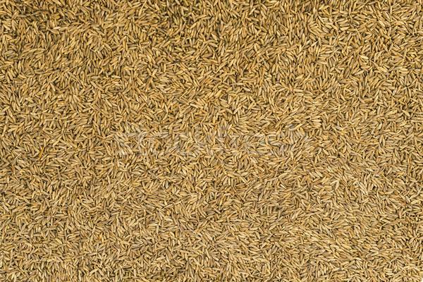 Aszalt kömény magok konyha fűszer gyógynövény Stock fotó © vinodpillai