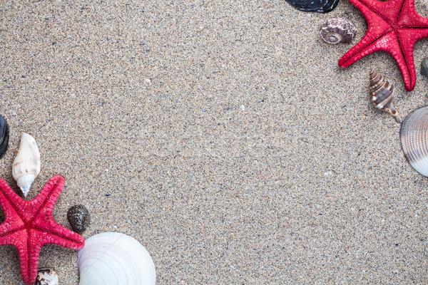 Stock fotó: Tenger · kagylók · homokos · copy · space · természet · terv