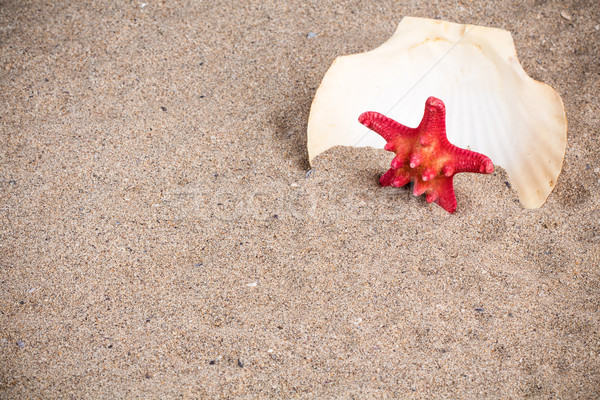 海 シェル ヒトデ 砂 砂の 自然 ストックフォト © viperfzk