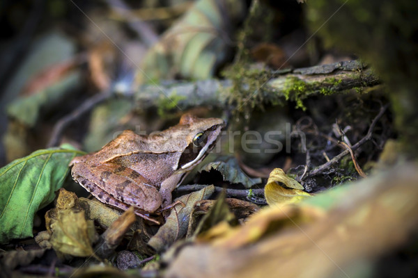 лягушка природного среда обитания природы зеленый среде Сток-фото © viperfzk