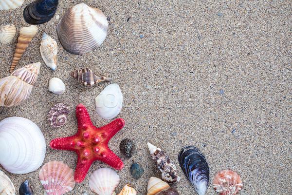 Tenger kagylók homokos copy space helyes természet Stock fotó © viperfzk