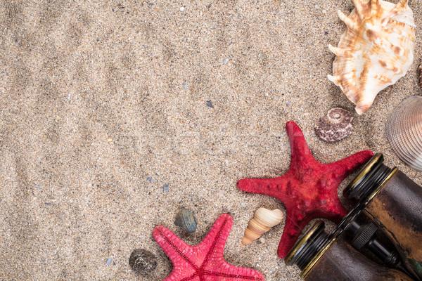 海 シェル 2 赤 ヒトデ 自然 ストックフォト © viperfzk