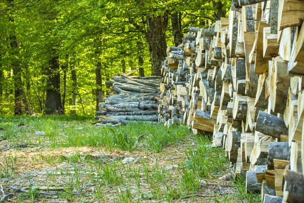 木材 緑 森林 日光 木 ストックフォト © viperfzk