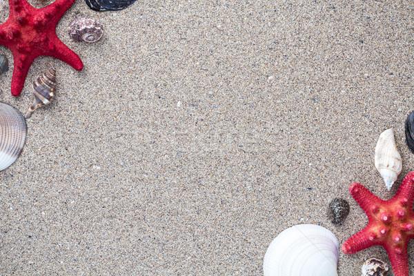 Mar conchas estrela peixe arenoso cópia espaço Foto stock © viperfzk