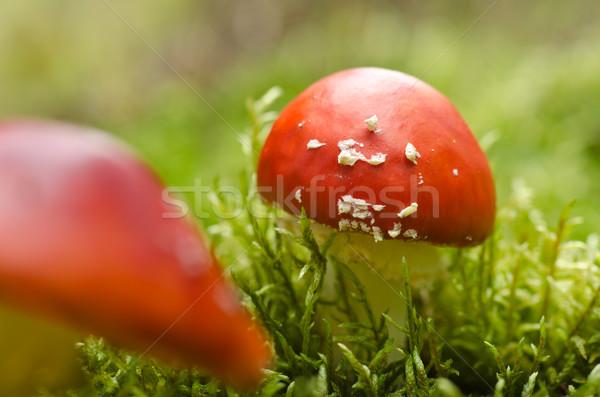 Mos bos champignons natuurlijke gelukkig verhaal Stockfoto © visdia