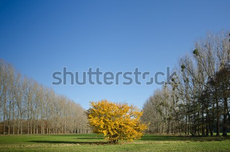 Bokor gyep erdő levelek szín park Stock fotó © visdia