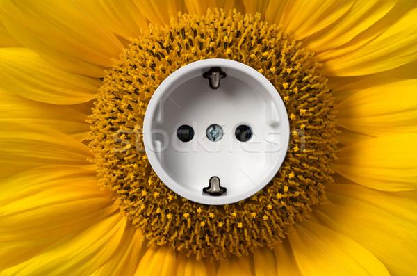Napraforgó foglalat virág nap fény energia Stock fotó © visdia