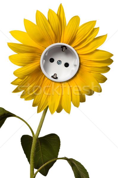 Zonnebloem stopcontact bloem zon licht energie Stockfoto © visdia