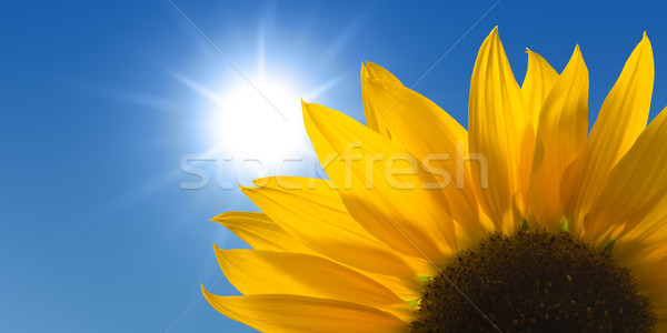 Zonnebloem zonnige hemel bloem gras zon Stockfoto © visdia