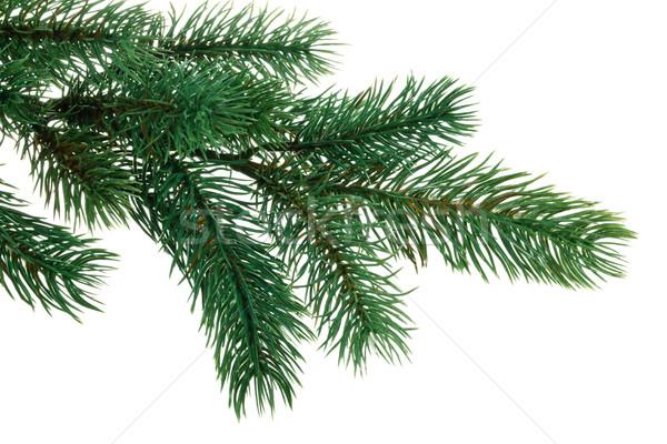 Ramo verde isolato bianco albero Foto d'archivio © Vitalina_Rybakova