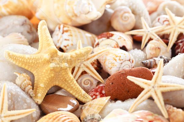 Conchiglie mare estate gruppo pietra starfish Foto d'archivio © Vitalina_Rybakova
