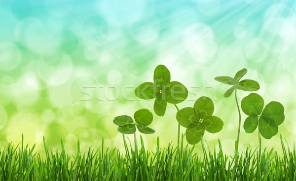 クローズアップ ショット フィールド 草 ぼやけた 自然 ストックフォト © Vitalina_Rybakova