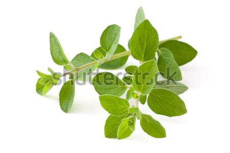 Fresh oregano. Stock photo © Vitalina_Rybakova