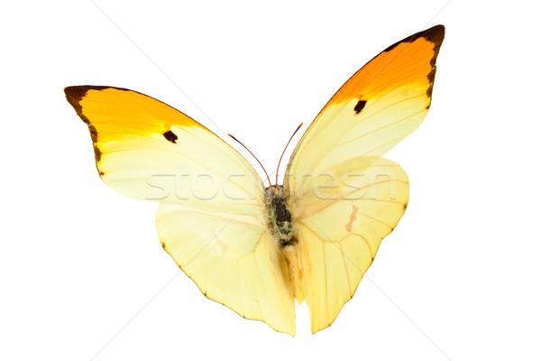Pillangó közelkép lövés repülés izolált fehér Stock fotó © Vitalina_Rybakova