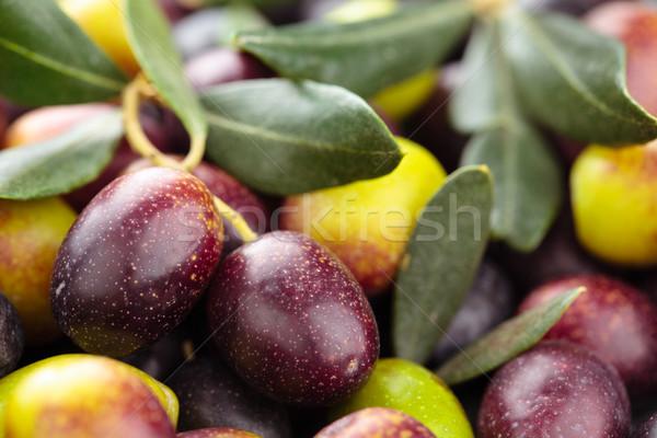 Friss olajbogyók háttér zöld fekete oliva levelek Stock fotó © Vitalina_Rybakova