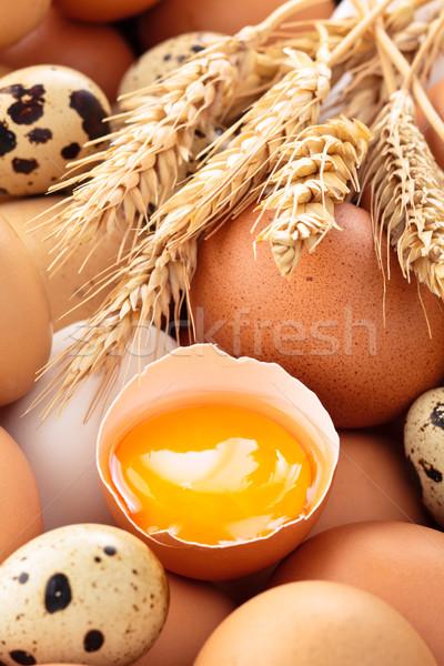 Geen beschrijving kip groep boerderij tarwe Stockfoto © Vitalina_Rybakova