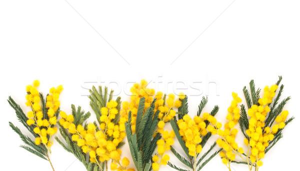 Tak shot bloemen geïsoleerd witte Stockfoto © Vitalina_Rybakova