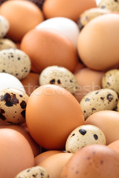 Vers eieren shot kip Pasen Stockfoto © Vitalina_Rybakova