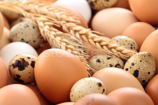 新鮮な 卵 ショット 鶏 イースター ストックフォト © Vitalina_Rybakova