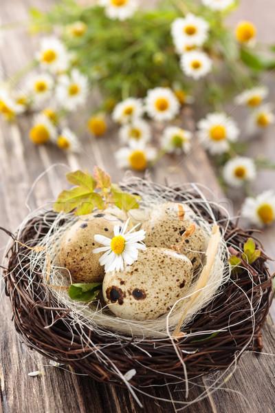 Eieren nest houten Pasen bloem Stockfoto © Vitalina_Rybakova