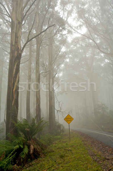 Misty drive thought the forrest  Stock photo © Vividrange